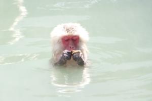 nagano onsen monkey