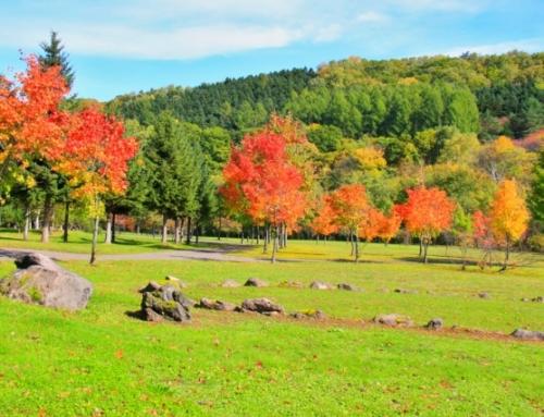 Hokkaido and Sapporo Autumn Trip 2017