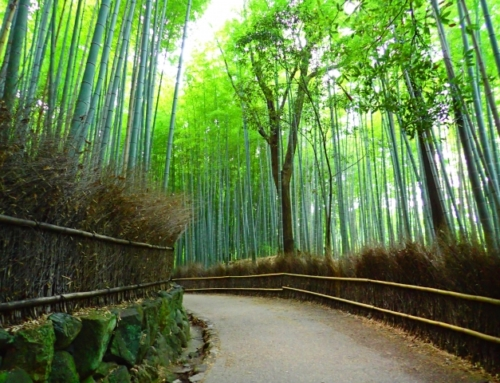 Arashiyama half a day sightseeing by bicycle