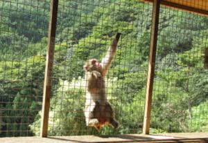 kyoto arashiyama monkey park
