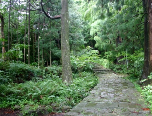 [A route recommended by Japan Tourism Agency] Nostalgic course in SHORYUDO