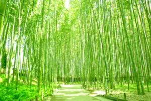 kyoto arashiyama bamboo